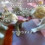 ネコは肉食獣でしょ?