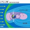 【在校生 理科系向け】宇宙なら九大より名古屋大?JAXA、ヴァンアレン帯を調べる衛星探査機打ち上げへ