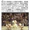 【動画】八百長(やおちょう)モンゴル人たちが跋扈(ばっこ)する前の本気すもう
