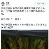 【日本とは違う国】中国の緑化事業とは、枯れ木を緑色のペンキで着色すること